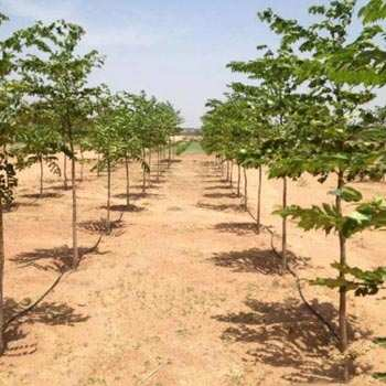 Agricultural/Farm Land for Sale in Shad Nagar, Hyderabad