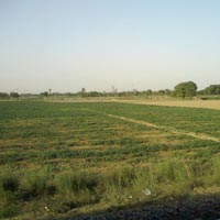 Land in Datia