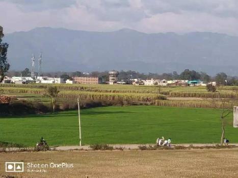 35bigha agriculture land in Shankerpur near Selaqui