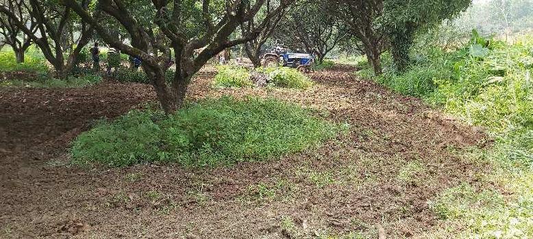 1bigha land for Farm house near dehradun city
