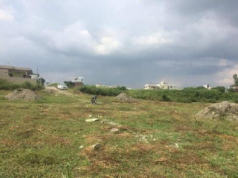 17bigha land on Dholas to jamunwala Road,