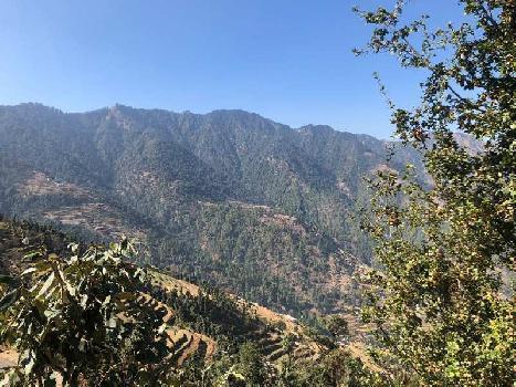 10 nali land near dhanaulti, 2400gaz land