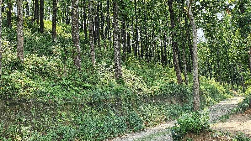 176.3gaz plot in choki dholas on 20ft Road