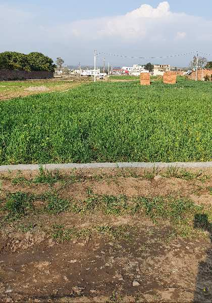 104 gaz plot in ramgarh, shimla byepass Road best for investment