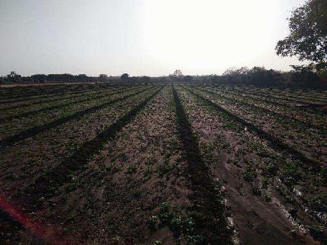 Farm Land for Sale in Veraval, Gir Somnath