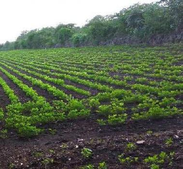 Agricultural/Farm Land for Sale in Sasan Gir, Junagadh