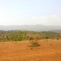 Sale 50acres Agriculture Land ,Nandgaon Ciplun