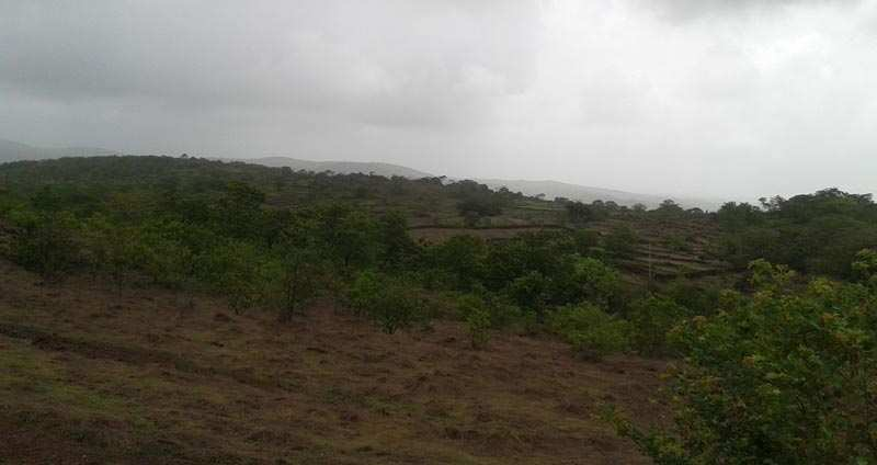 68 Accer Agriculture Land Sell in Tala - Raigad