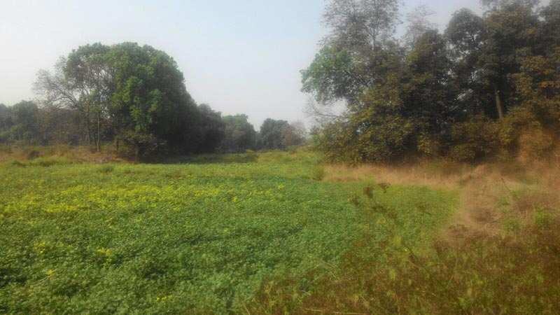 4.5 acrs land for sell at revir side