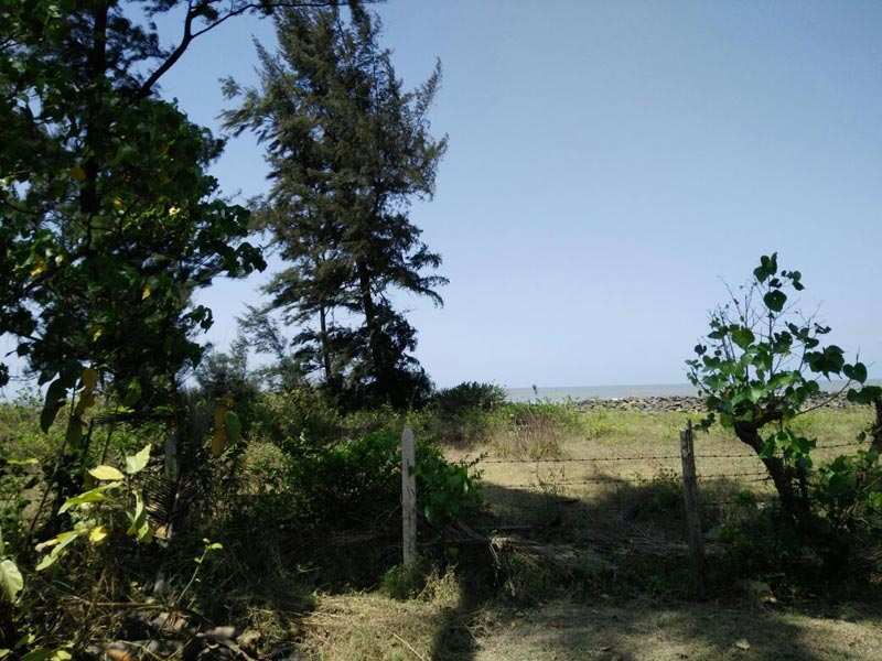 60 Guntha Sea Touch Plot for Sell At Akshi Beach for Just16 Lc/ Guntha