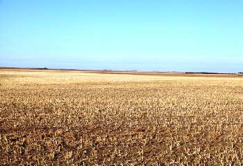 100 Ares Agricultural/Farm Land for Sale in Dataganj, Budaun