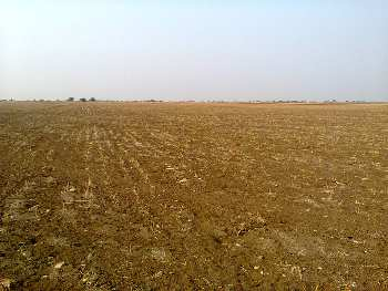 50 Ares Agricultural/Farm Land for Sale in Kaimganj, Fatehgarh