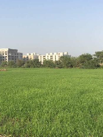 10 bigha Land for sale