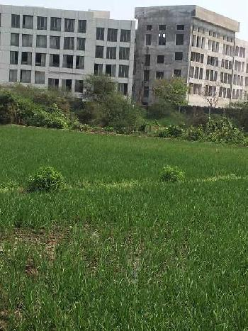 10 bigha Land for sale