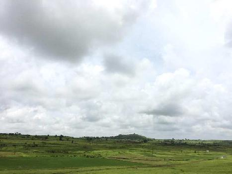 Agricultural/Farm Land for Sale in Dindori, Nashik