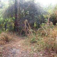 Residential Plot for sale in Palakkad,Kerala