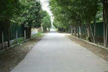 Farm Land for sale noida expressway near by sec.135  plot size. 1008 sqyds 47.50 lac