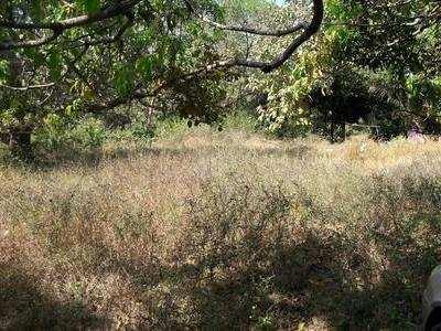 Residential Land for Sale in Morjim, North Goa