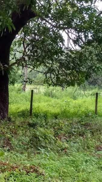 Independent property measuring 1400 sqmts at Anjuna North Goa