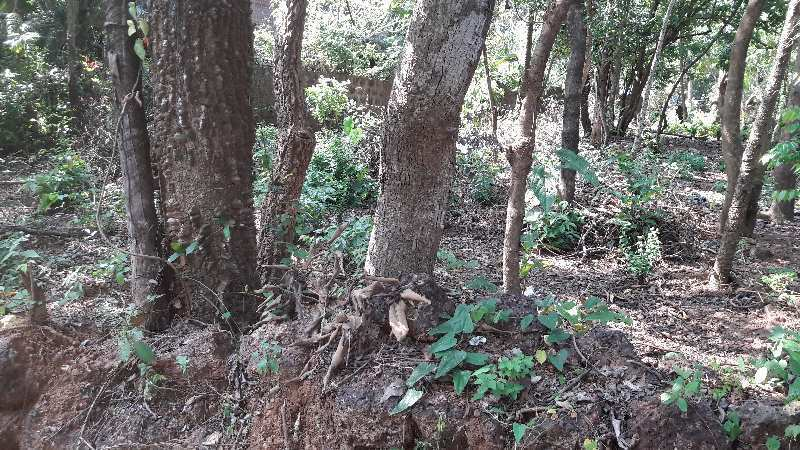 Property for sale in Siolim Goa
