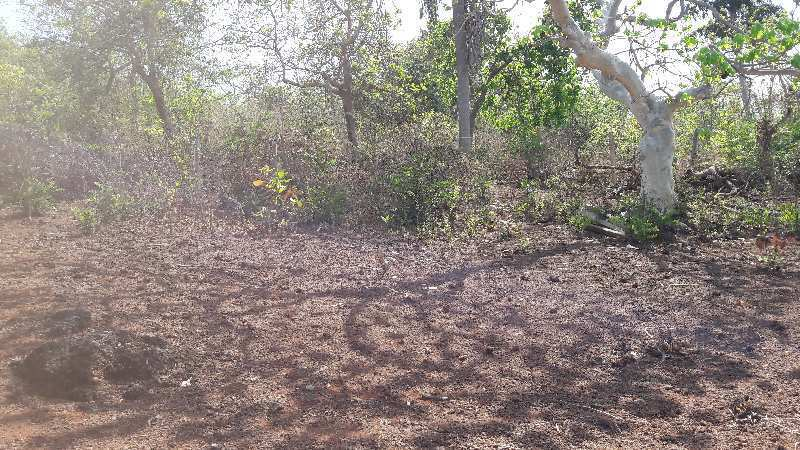 7 acre property in Nerul North Goa for sale