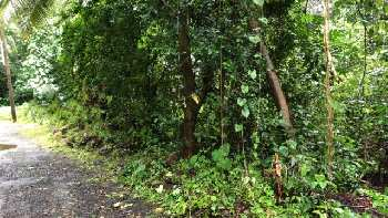 1525sqmt plot for Sale Nachinola-Mapusa, North-Goa. (1.98Cr)