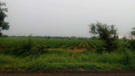 Agriculture land for sale at Rancharda