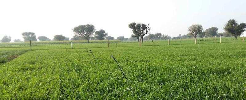 Agriculture Land for sale at Nandoli