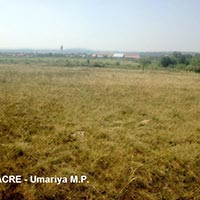 Agricultural/Farm Land for Sale in Umaria