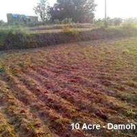 10 Acre Agricultural/Farm Land for Sale in Damoh