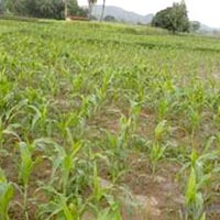 Agricultural/Farm Land for Sale in KATNI