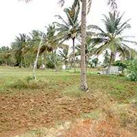 Agricultural/Farm Land for Sale in Dewas