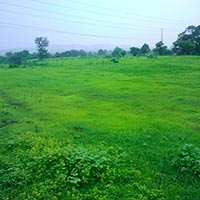 Farm Land for Sale in Shahdol