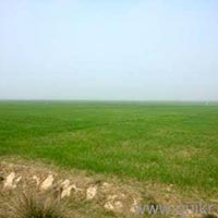 Agricultural/Farm Land for Sale in Vidisha