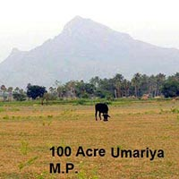 100 Ares Farm Land for Sale in Umaria