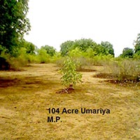 104 Ares Agricultural/Farm Land for Sale in Umaria