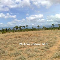 25 Ares Agricultural/Farm Land for Sale in Lakhnadon, Seoni