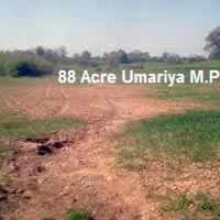 88 Ares Agricultural/Farm Land for Sale in Umaria