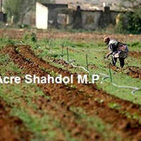 Agricultural/Farm Land for Sale in Shahdol