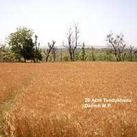 Agricultural/Farm Land for Sale in Damoh