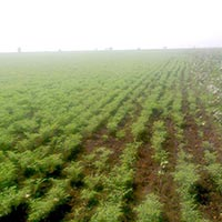 Agricultural/Farm Land for Sale in Sagar