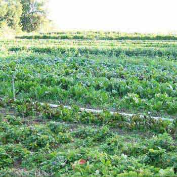 Agricultural/Farm Land for Sale in Narsinghpur