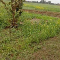 51 Acres Land for Agriculture