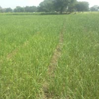 100 Acres Land for Agriculture