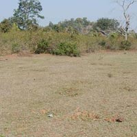 110 Acres Land for Agriculture