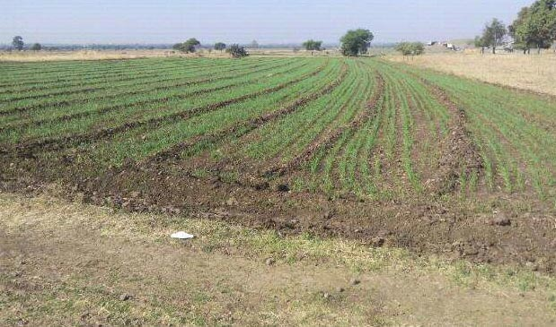 600 Acres Land for Agriculture