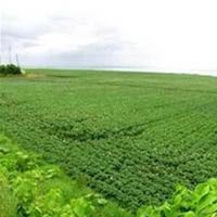112 Acres Land for Agriculture