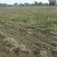 15 Acres Land for Agriculture