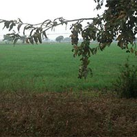 145 acres Land for agriculture