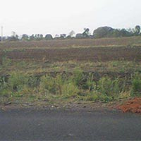 6.5 Acres Land for Agriculture